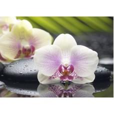 Азалия Орхидея - декор 1
