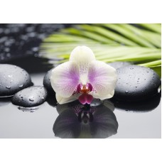 Азалия Орхидея - декор 2