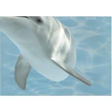 Лазурь декор дельфины 8 бирюзовый