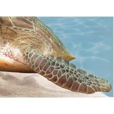 Лазурь панно морской мир 12 бирюзовый